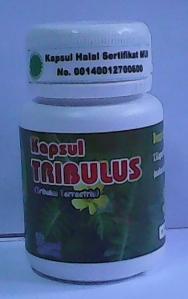 kapsul tribulus
