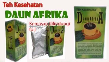teh_kesehatan_daun_afrika_video